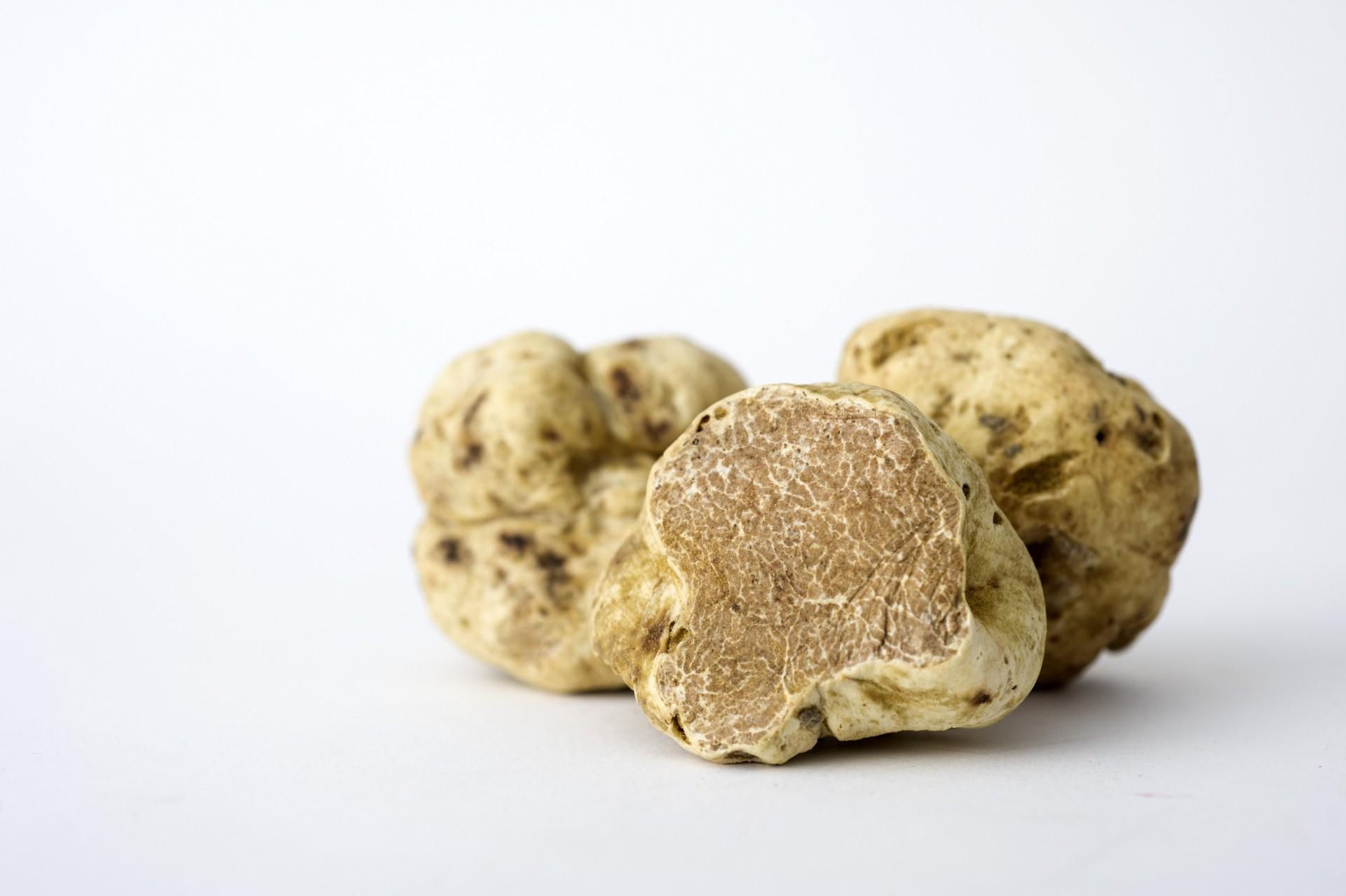 White-truffle-resort_čiže